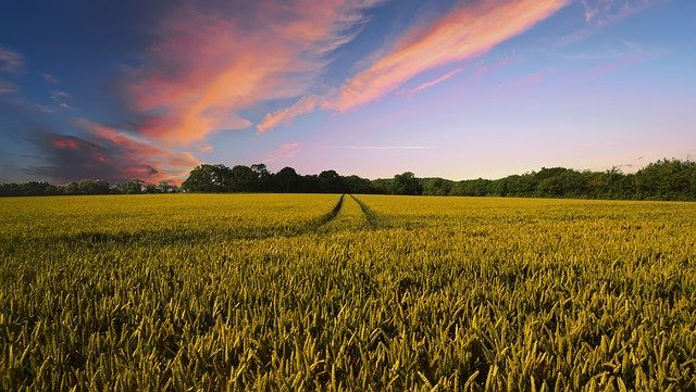 agriculture compétitive