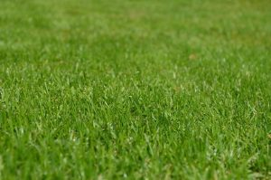 pelouse épandage