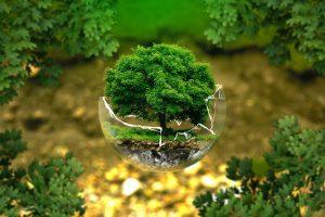 crise écologique