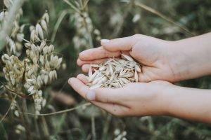 faire-germer-des-graines