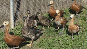Quel équipement et matériel choisir pour un élevage avicole ?