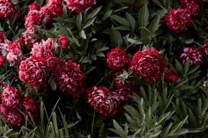 fleur-potager